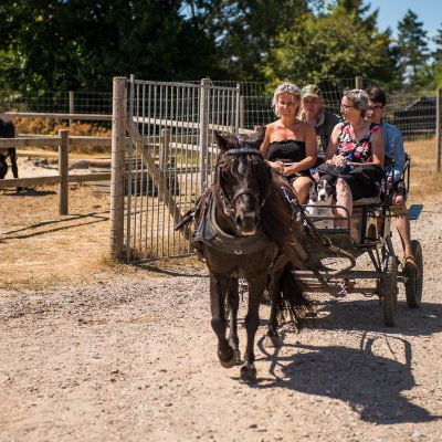 coach-riding-with-horses (1)