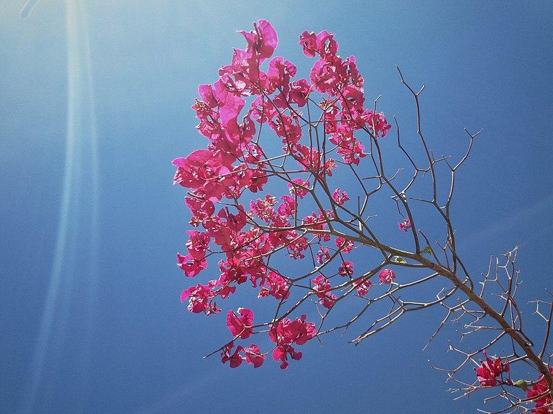 Moroccan_Flower_Rose