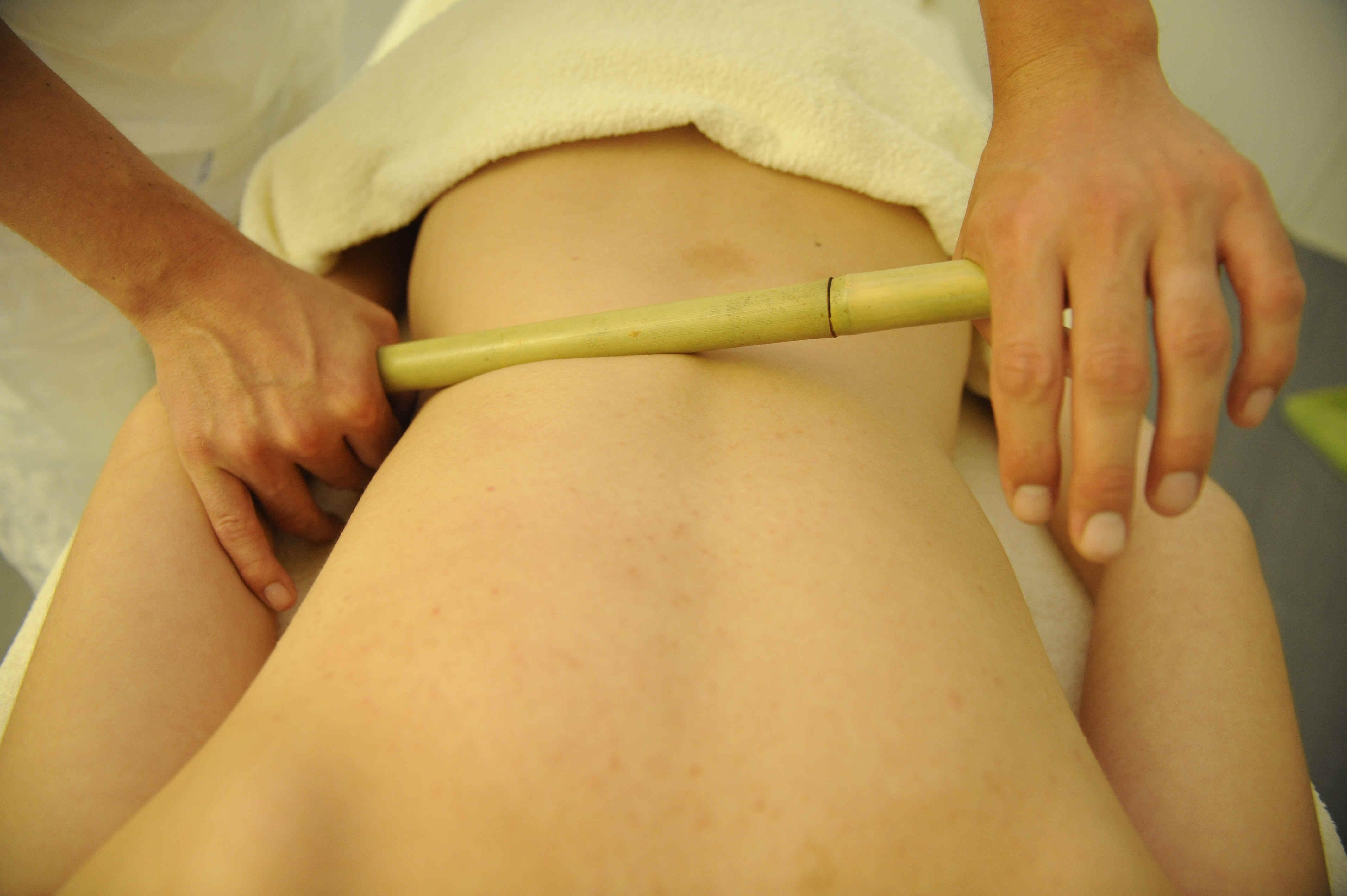 bambus-will