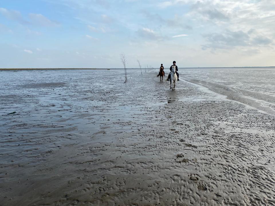 Vadehavet1